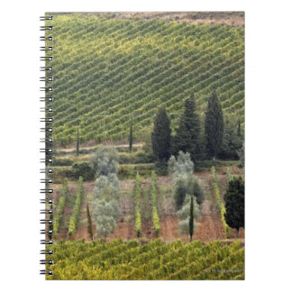 Elevated view of vineyard and olive trees spiral notebook