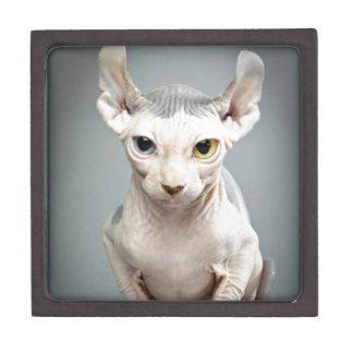 Elf Sphinx Cat Photograph Premium Jewelry Boxes