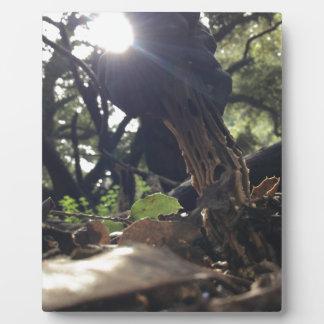 Elfin Saddle Mushroom Plaque
