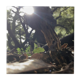 Elfin Saddle Mushroom Tile