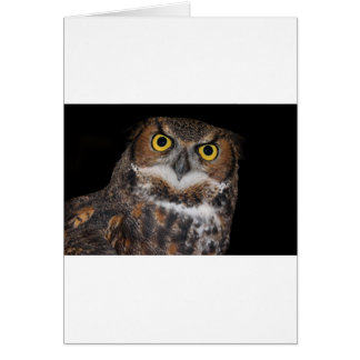 Eli - Great Horned Owl II Card