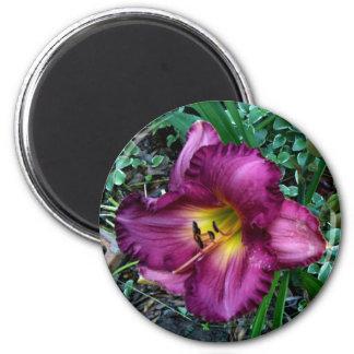 Elizabeth Townsen Hybrid Daylily Magnet