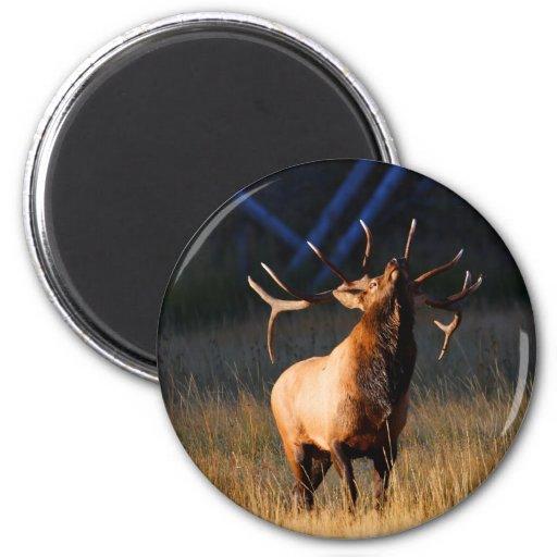 elk 2 inch round magnet