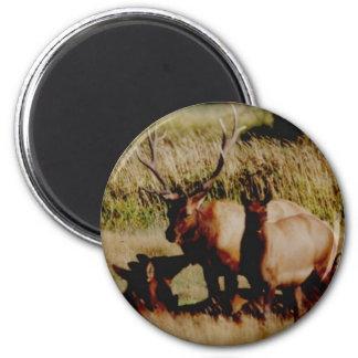 elk anyone? 2 inch round magnet