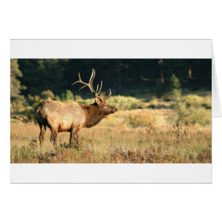 Elk Buck Card