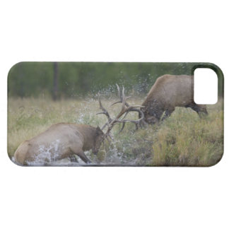 Elk Bulls fighting, Yellowstone NP, Wyoming Case For The iPhone 5