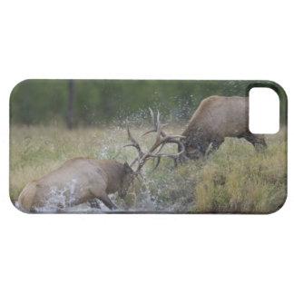 Elk Bulls fighting, Yellowstone NP, Wyoming iPhone 5 Cases