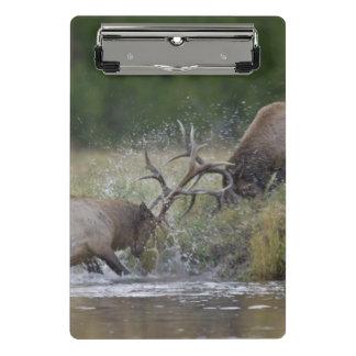 Elk Bulls fighting, Yellowstone NP, Wyoming Mini Clipboard