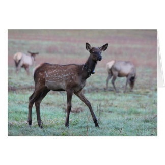 Elk Calf Card