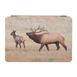Elk (Cervus Elephus) Bull Herding Harem 2 iPad Mini Cover