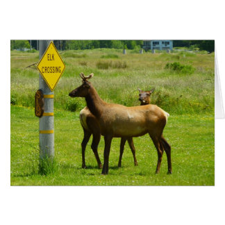 Elk Crossing California Wildlife Card