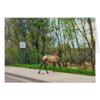 Elk Crossing Street Card