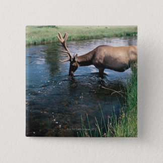Elk drinking from stream , Yellowstone National 2 Inch Square Button