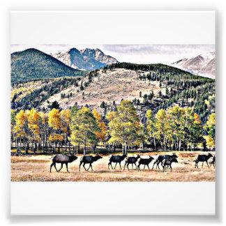 Elk Fest Photo Print