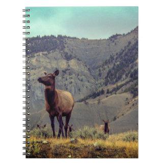 Elk Herd Notebook