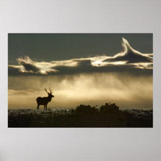 elk in horseshoe park rmnp poster