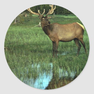 Elk in Velvet Round Sticker