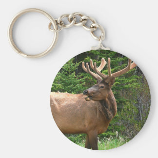 Elk in Velvet Unique Wildlife Gift Ideas Hunters Keychain