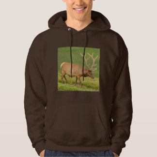 Elk in velvet walking, Colorado Hoodie