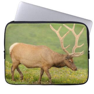 Elk in velvet walking, Colorado Laptop Sleeve