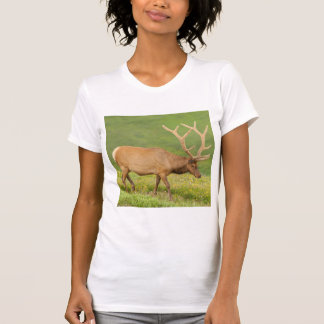Elk in velvet walking, Colorado T-Shirt