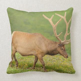 Elk in velvet walking, Colorado Throw Pillow