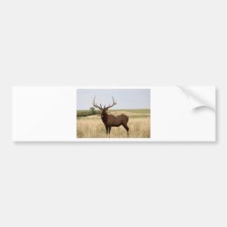 Elk on Canadian Prairies Bumper Sticker