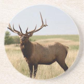 Elk on Canadian Prairies Coaster