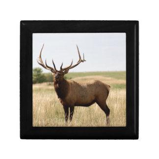 Elk on Canadian Prairies Gift Box