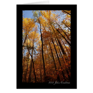 Elkmont nature trail trees in the Smokies Card
