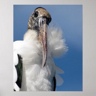 Elvis - Wood Stork Poster