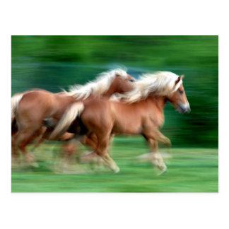 Emballage de la carte postale de chevaux de