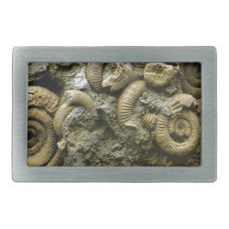 embedded snails fossils belt buckle