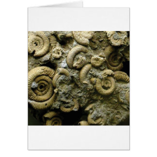 embedded snails fossils card