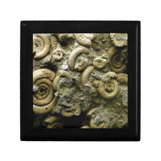 embedded snails fossils gift box