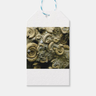 embedded snails fossils gift tags
