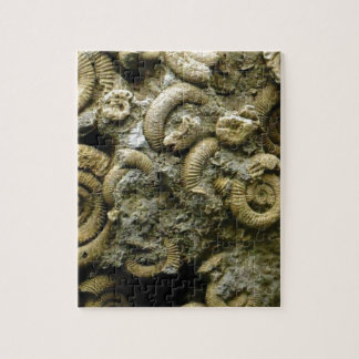 embedded snails fossils jigsaw puzzle