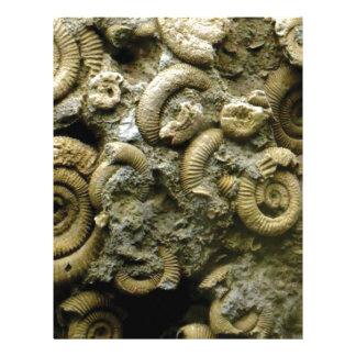 embedded snails fossils letterhead