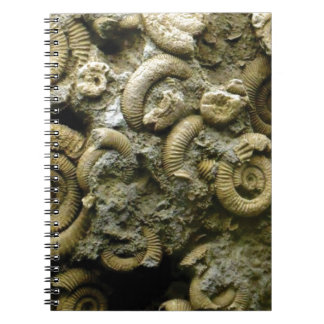 embedded snails fossils notebooks