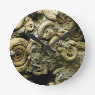 embedded snails fossils round clock