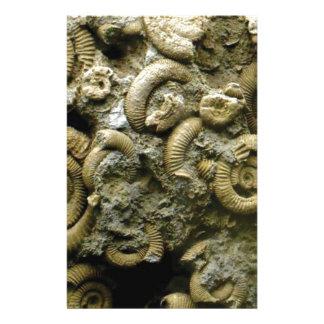 embedded snails fossils stationery