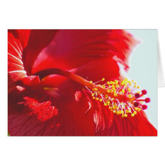 Embossed Red Hibiscus, Flame Card