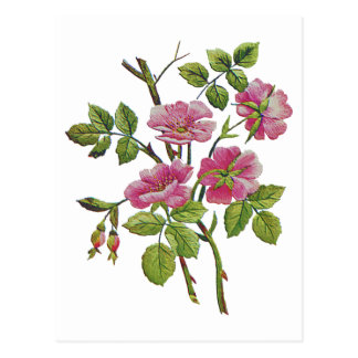 Embroidered Pink Old English Roses Postcard