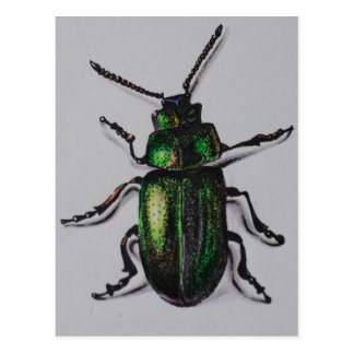 Emerald Beetle Products Postcard