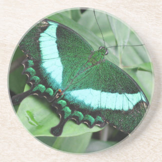 Emerald (Peacock) Swallowtail Drink Coasters