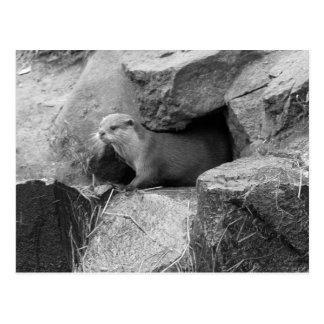 """Emerging Otter"" Postcard"
