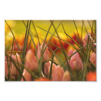 Emerging Spring. Photo Art