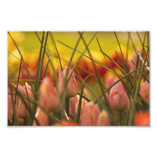 Emerging Spring. Photo Print