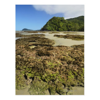 Emmagen Beach, Daintree National Park (UNESCO Postcard