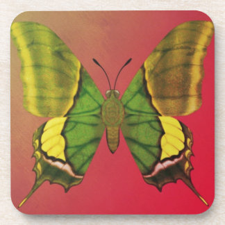 Emperor of India Butterfly Beverage Coaster